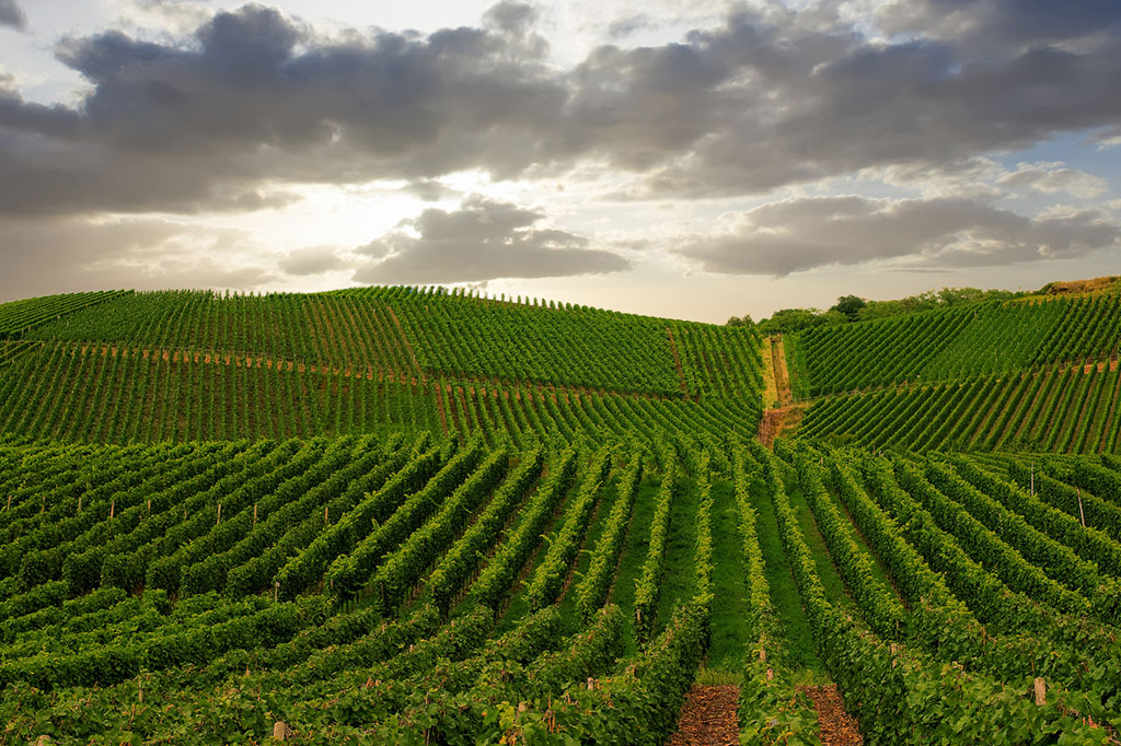 geographical indication opposition case australia grape and wine incorporated iphub asia
